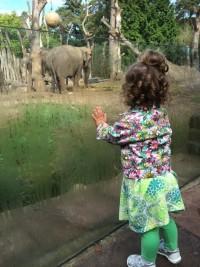 Elif bij de olifanten