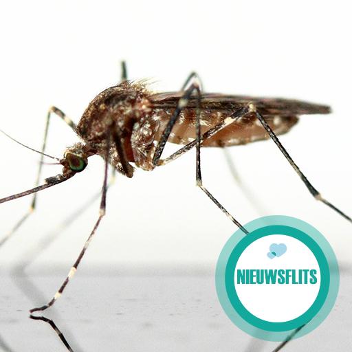 Zika-epidemie: belangrijk nieuws voor zwangeren