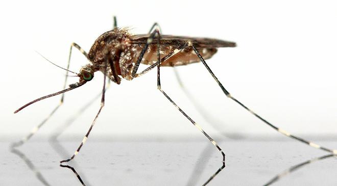 Zika-epidemie