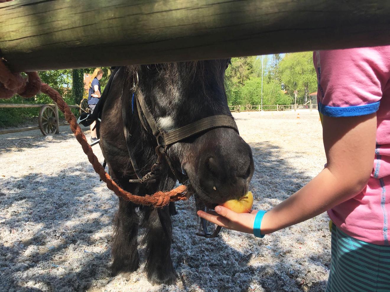 Rondje paardrijden - Bartjes Paardendagen