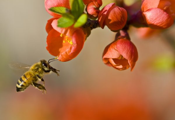 flowers and bees1