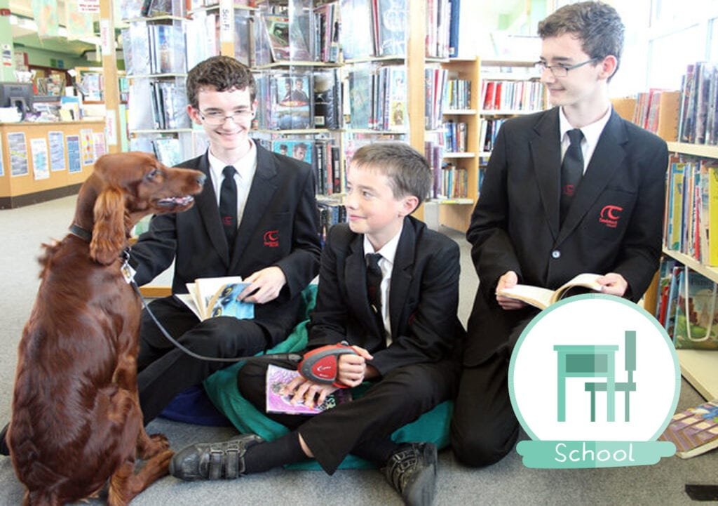 Britse school zet puppy in tegen examenstress