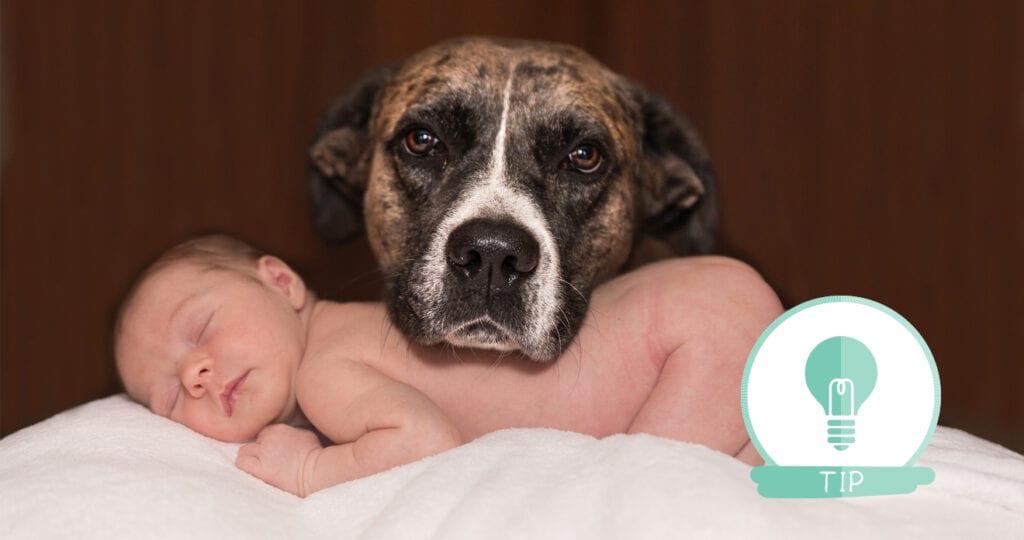 Tips van de dierenarts: Eerste kennismaking huisdier met baby