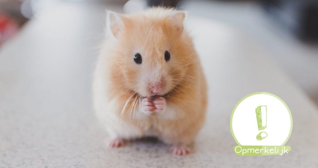 Viral post zorgt voor paniek: Heb ook jij je hamster levend begraven?