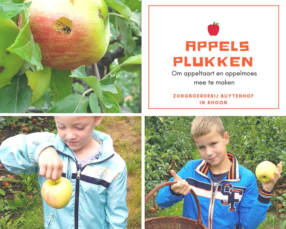 Appels plukken Eiland IJsselmonde