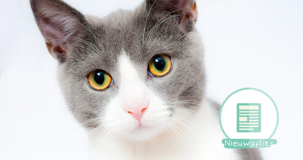 Berekening: zoveel kost een kat!