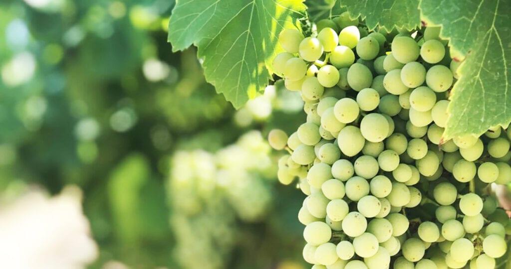 Snelcursus wijnen voor beginners: deze wijn is altijd een goed idee!