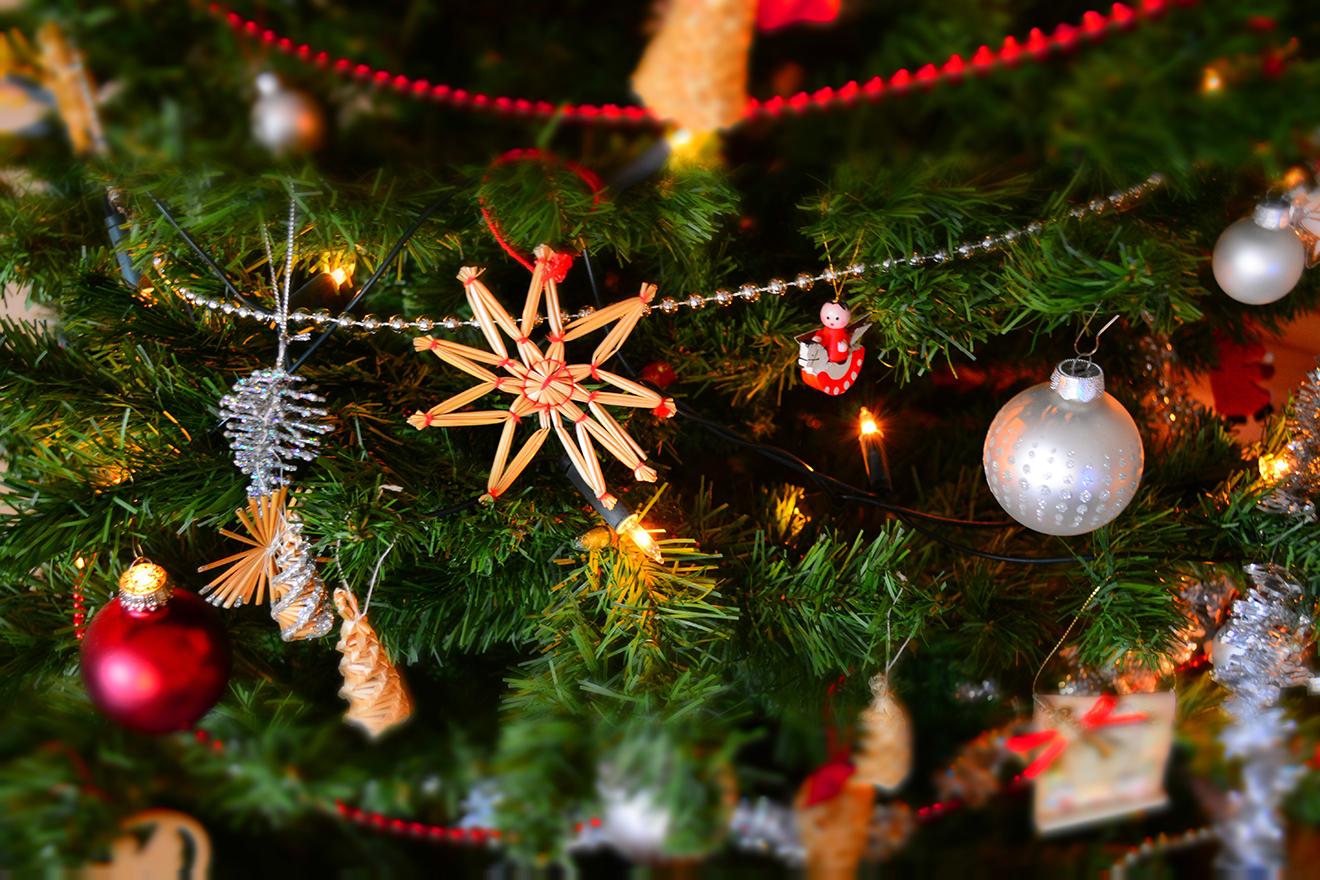 Neppe Kerstboom echte kertstboom