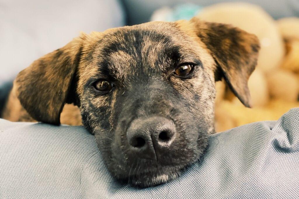 Twee weken hondenmama: hoe gaat het nu?