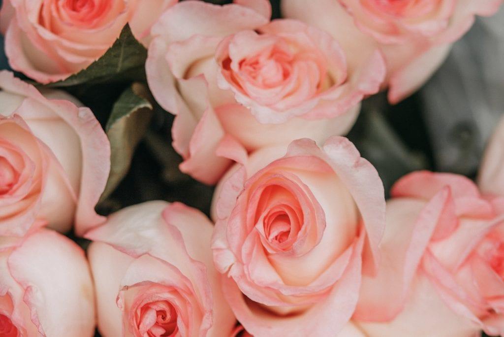 Hoeveel rozen geven met Valentijnsdag?